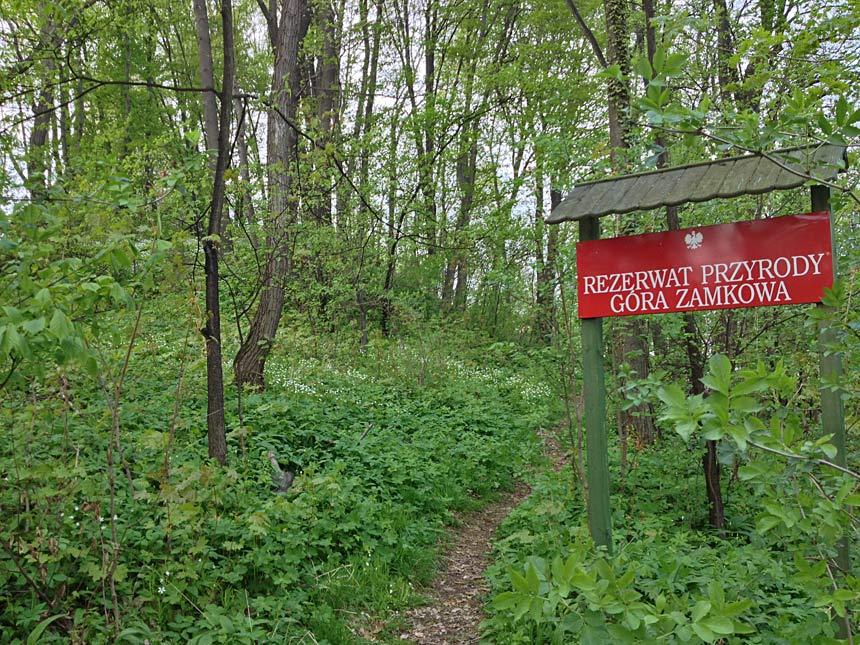 Rezerwat Góra Zamkowa we Wleniu