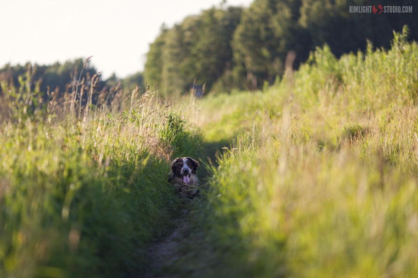 Наш пёс Азор