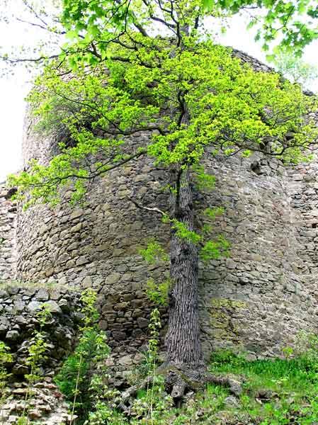 Zamek Cisy - ruiny