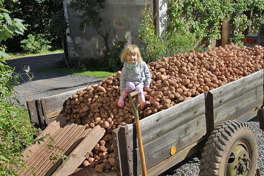 Kartoffeln aus Polen