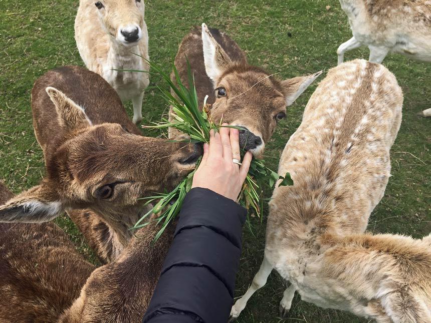 A walk in the eco farm and feeding animals