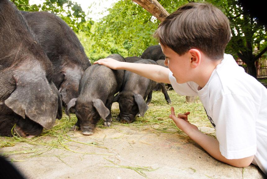 Zoo Görlitz is interactive and child-friendly.