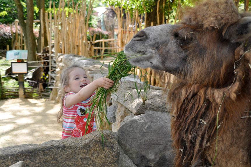 Зоопарк в Гёрлиц